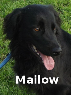 Mailow